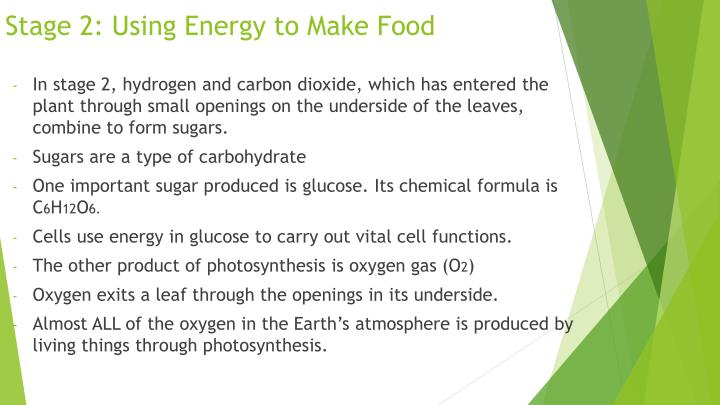 Stage 2: Using Energy to Make Food