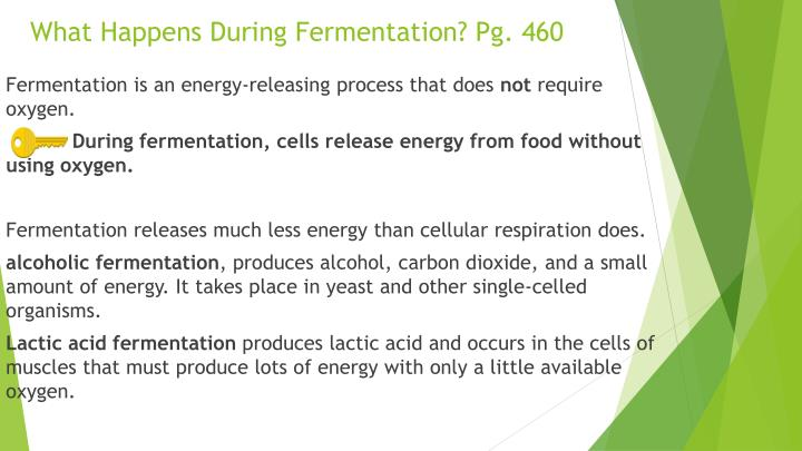 What Happens During Fermentation? Pg. 460