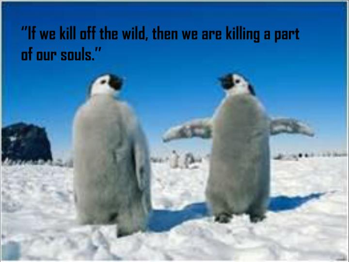 ''If we kill off the wild, then we are killing a part of our souls.''