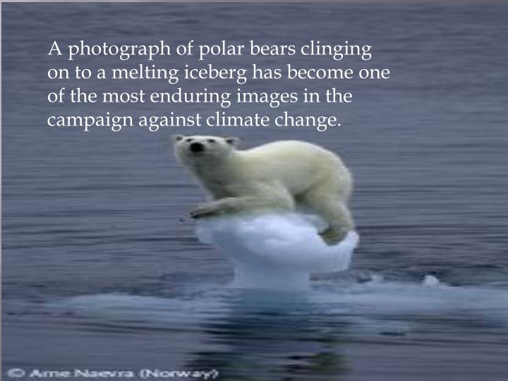 A photograph of polar bears clinging on to a melting iceberg has become one of the most enduring images in the campaign against climate change.