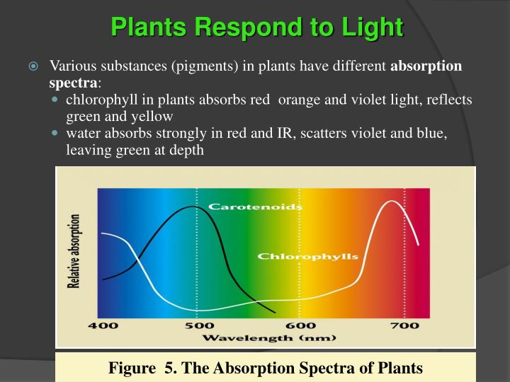 Plants Respond to Light