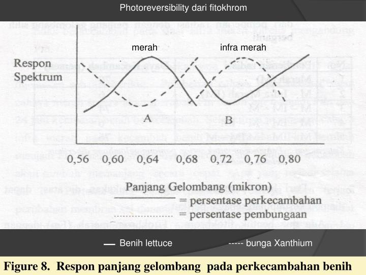 Photoreversibility