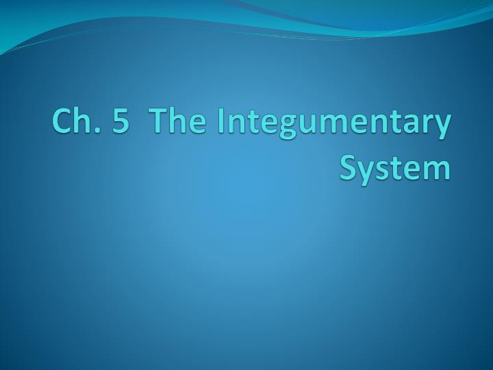 Ch 5 the integumentary system