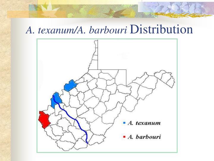 A. texanum/A. barbouri