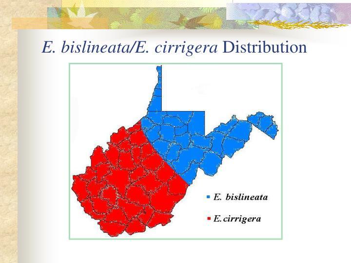 E. bislineata/E. cirrigera