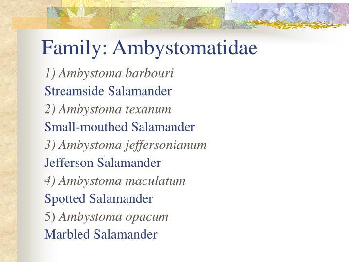 Family: Ambystomatidae