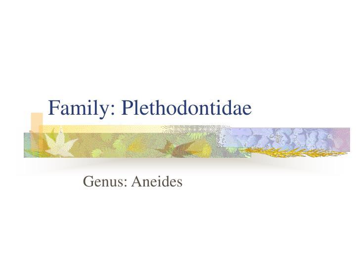 Family: Plethodontidae