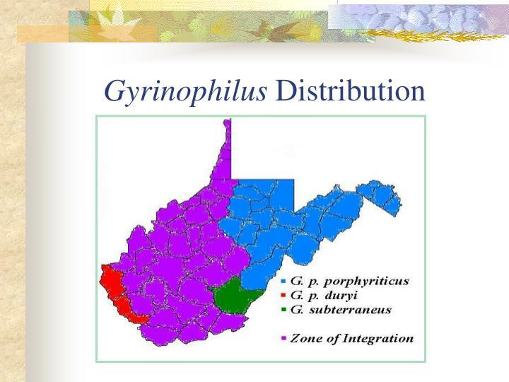 Gyrinophilus