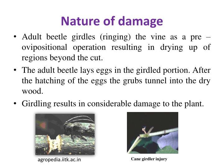 Nature of damage