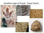 another type of fossil trace fossil