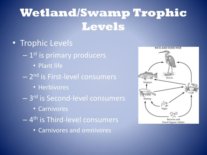 Wetland/Swamp Trophic Levels