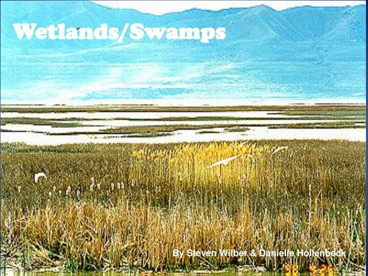 Wetlands swamps