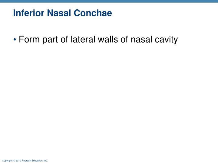 Inferior Nasal Conchae