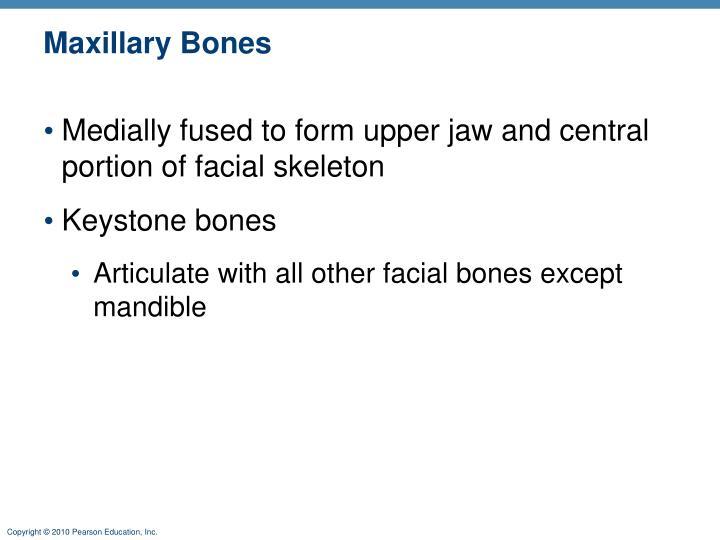 Maxillary Bones