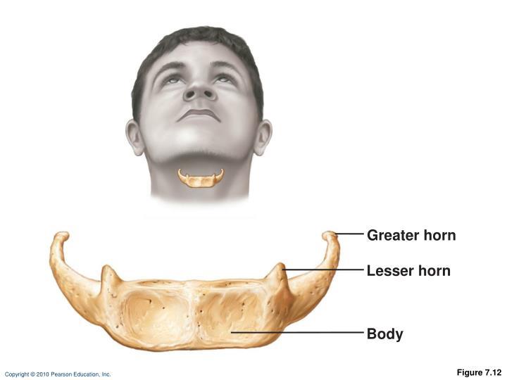 Greater horn