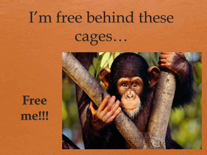 I'm free behind these cages…