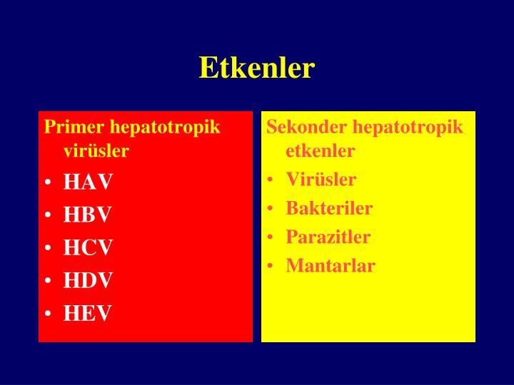 Primer hepatotropik virüsler