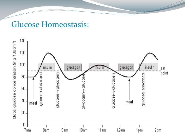 Glucose Homeostasis:
