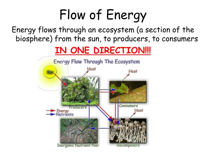 Flow of Energy
