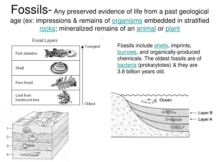 Fossils-