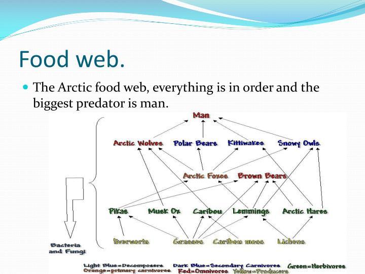 Food web.