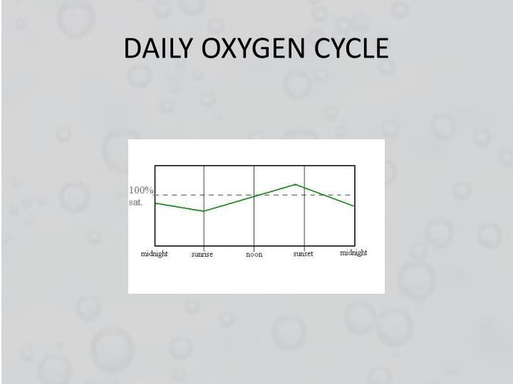 DAILY OXYGEN CYCLE