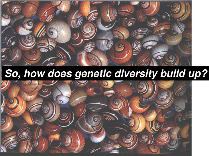 So, how does genetic diversity build up?
