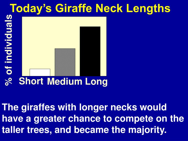 Today's Giraffe Neck Lengths