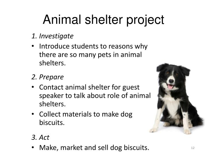 Animal shelter project
