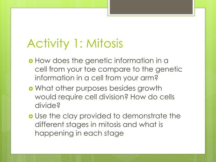Activity 1: Mitosis
