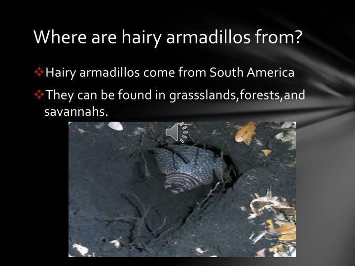 Where are hairy armadillos from?
