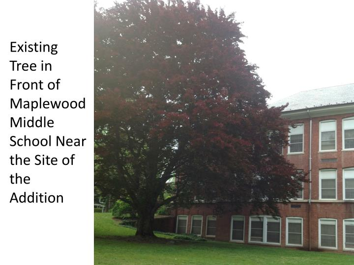 Existing Tree in Front of Maplewood Middle School Near the Site of the Addition