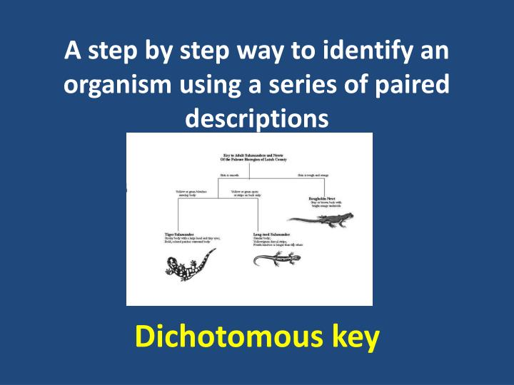 A step by step way to identify an organism using a series of paired descriptions