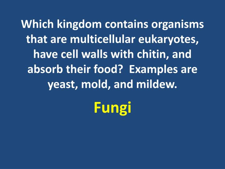 Which kingdom contains organisms that are