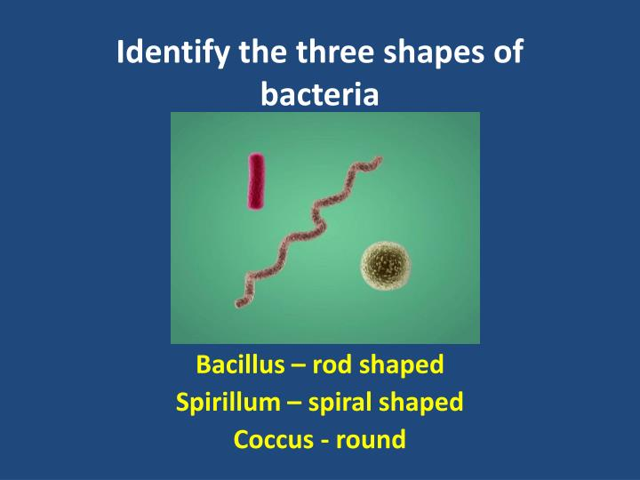 Identify the three shapes of bacteria