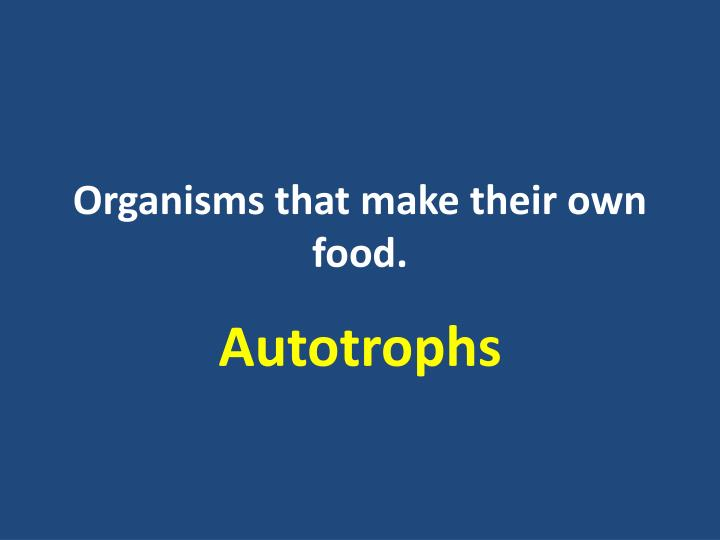 Organisms that make their own food.