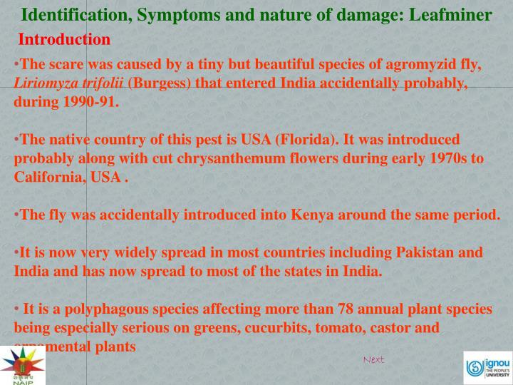 Identification, Symptoms and nature of damage: Leafminer