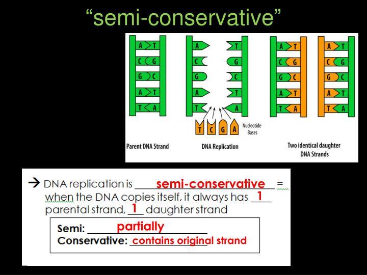 """""""semi-conservative"""""""