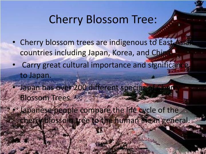 Cherry Blossom Tree:
