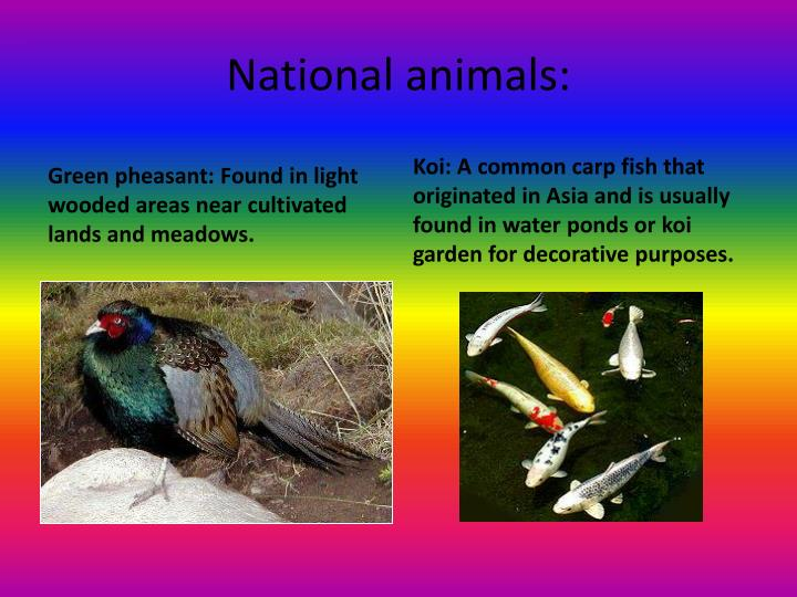 National animals: