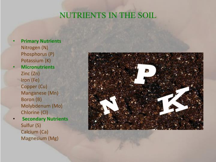 NUTRIENTS IN THE SOIL