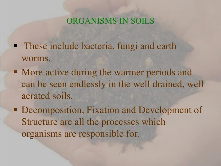 ORGANISMS IN SOILS