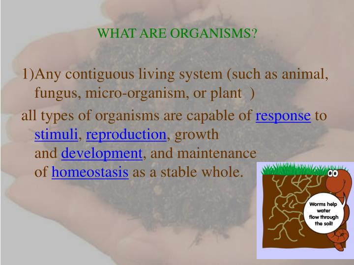 WHAT ARE ORGANISMS?