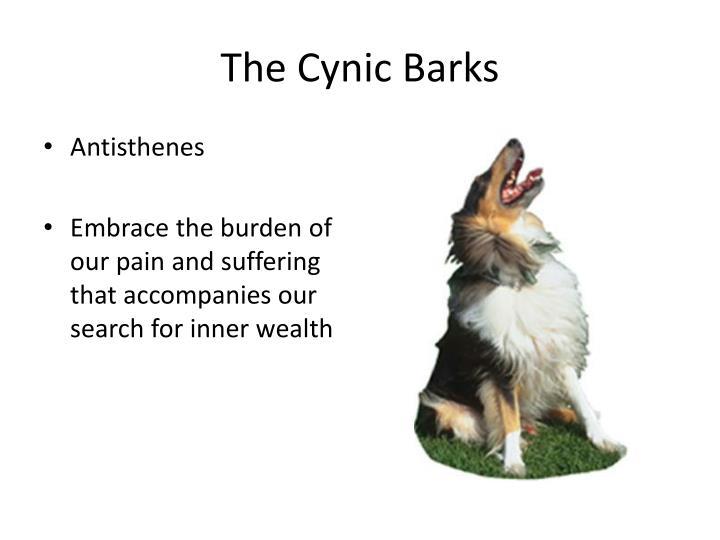 The Cynic Barks