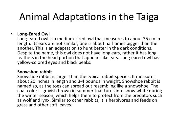Animal Adaptations in the Taiga