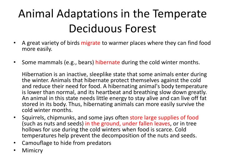 Animal Adaptations in the Temperate Deciduous Forest