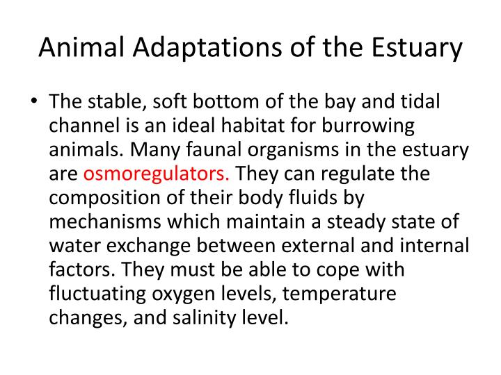 Animal Adaptations of the Estuary