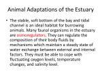 animal adaptations of the estuary