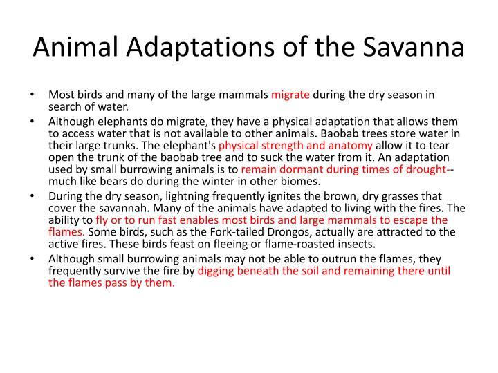 Animal Adaptations of the Savanna