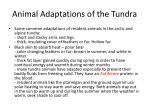 animal adaptations of the tundra